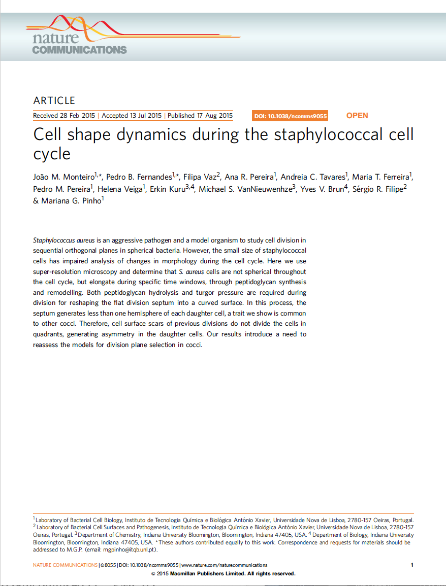 Cell shape dynamics during the Staphylococci cell cycle