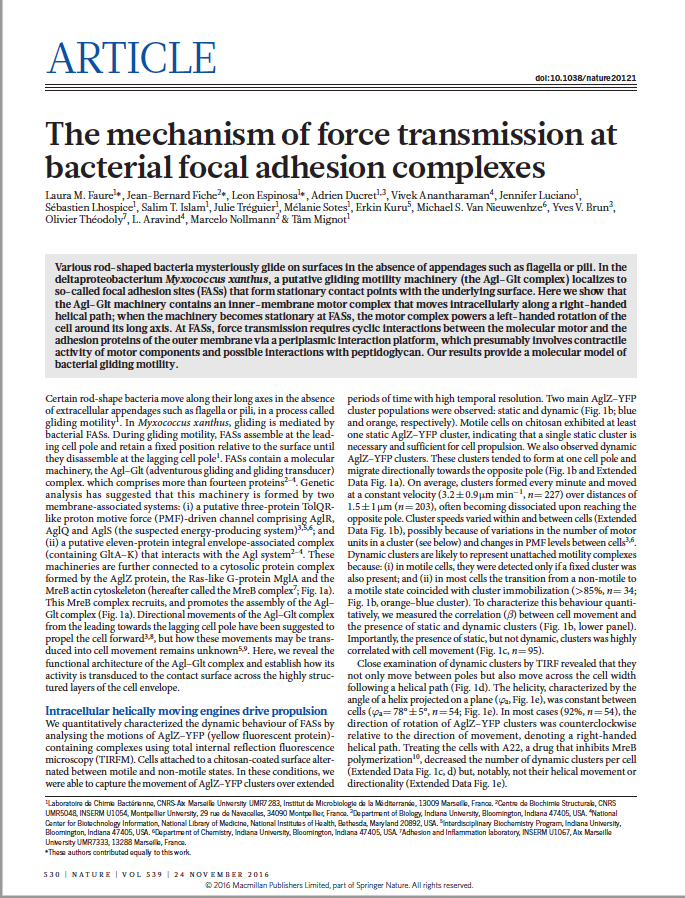 The mechanism of force transmission at bacterial focal adhesion complexes