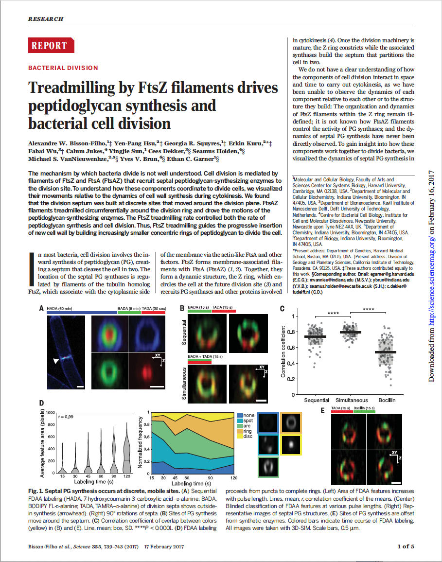 Treadmilling by FtsZ filaments drives peptidoglycan synthesis and bacterial cell division
