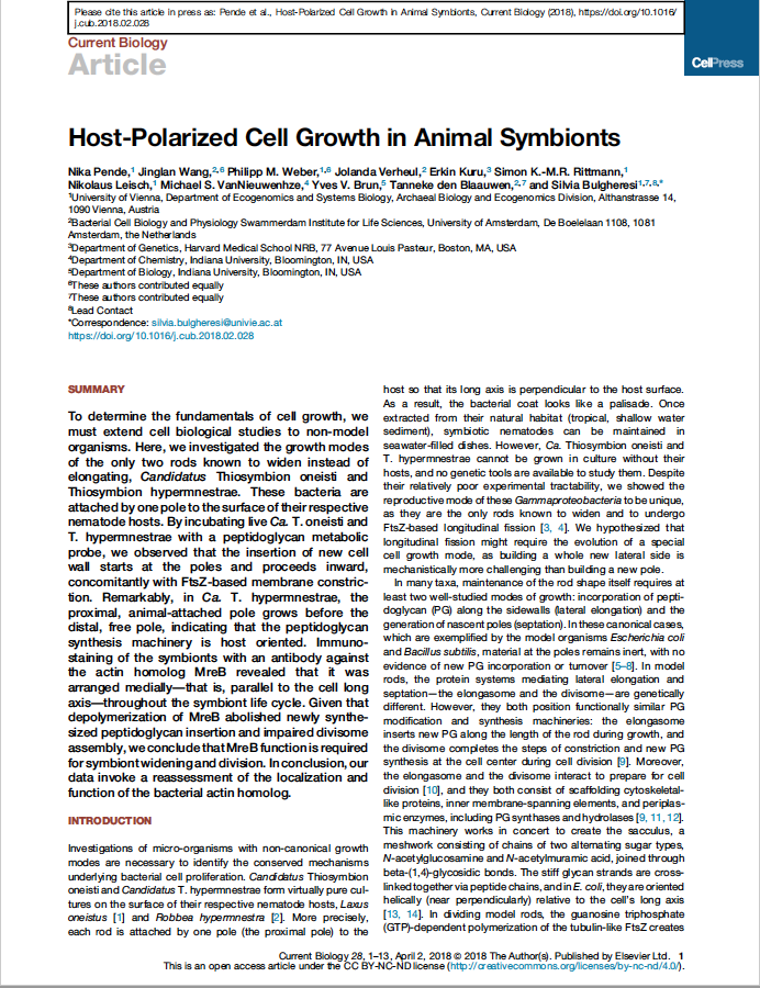 Host-Polarized Cell Growth in Animal Symbionts