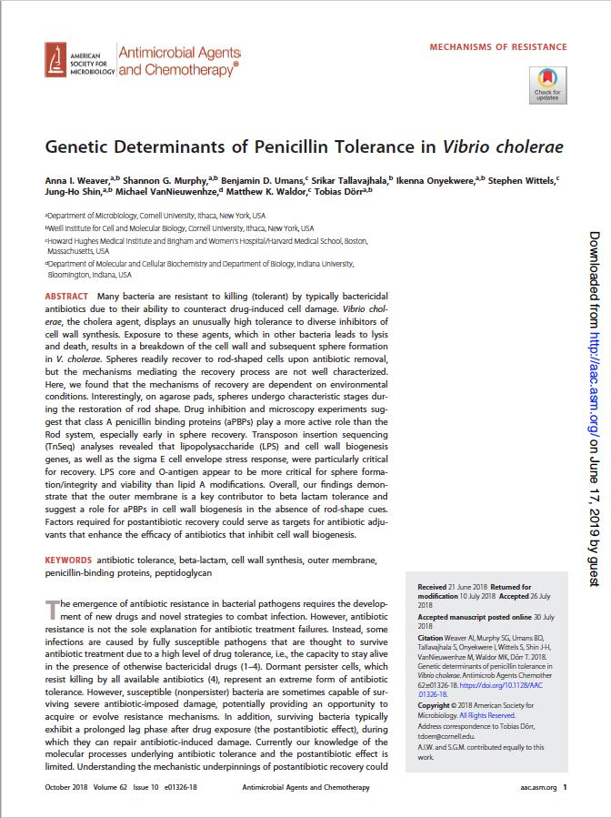 Genetic determinants of penicillin tolerance in Vibrio cholerae