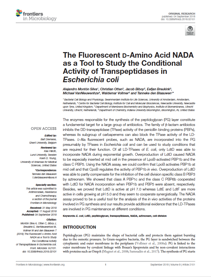 The fluorescent D-amino acid NADA as a tool to study the conditional activity of transpeptidases in Escherichia coli