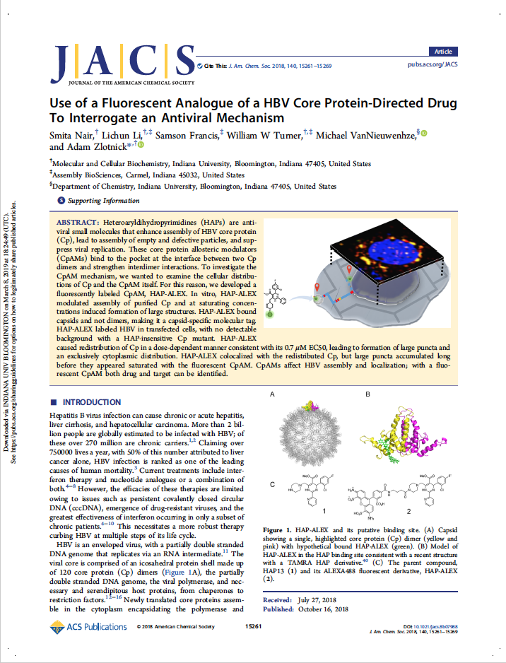 Use of a Fluorescent Analogue of a HBV Core Protein-directed Drug to Interrogate an Antiviral Mechanism