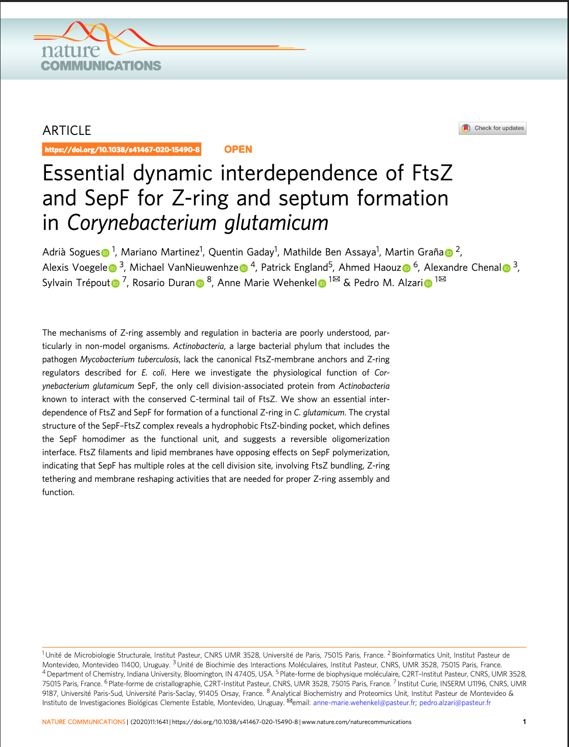 Essential dynamic interdependence of FtsZ and SepF for Z-ring and septum formation in Corynebacterium glutamicum
