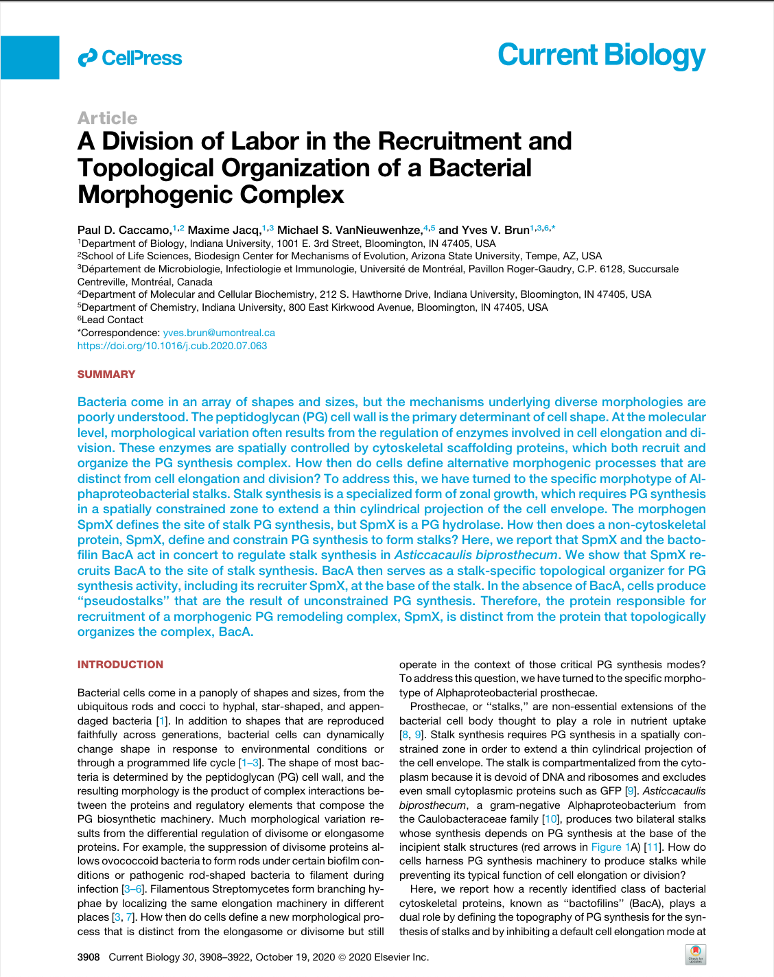 A Division of Labor in the Recruitment and Topological Organization of a Bacterial Morphogenic Complex